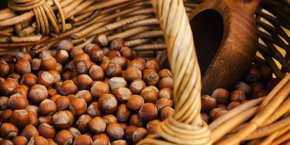 Afacere agricola profitabila –  plantatia de aluni
