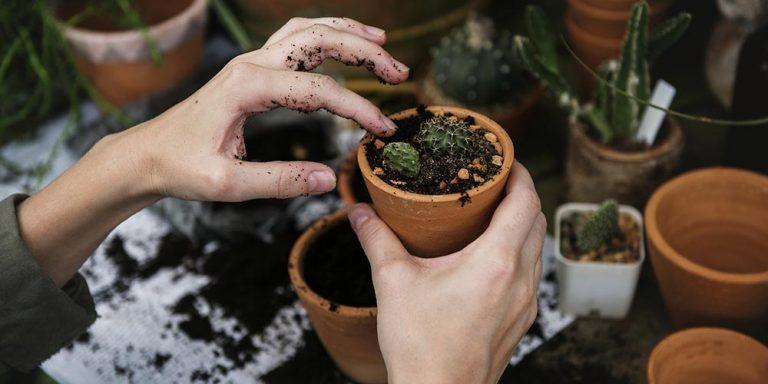 Cum sa deschizi o afacere profitabila cu flori in ghiveci